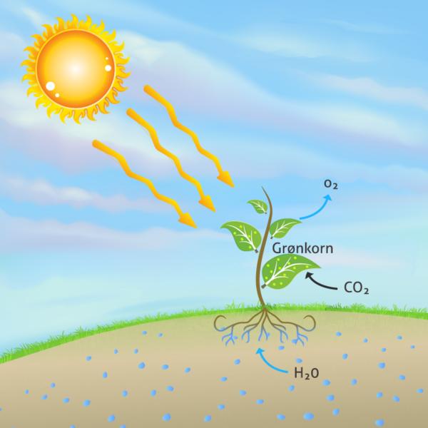 fotosyntese2