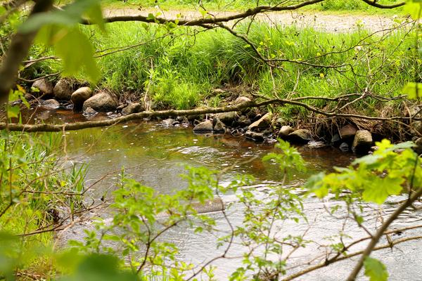 vandloeb fangst